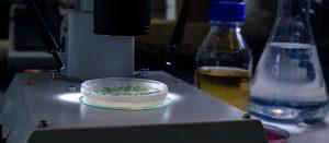Pars Bioscience, LLC
